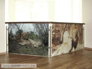 Ограждение с фотопечатью на стеклах
